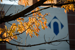 NCC logo with fall leaves